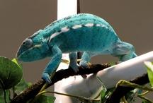 A Chameleons Canvas