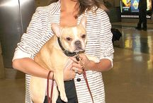 Celebs with dogs / I love dogs.