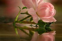 Фото, рисунки, цветы