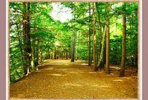 Biopat/naturopath
