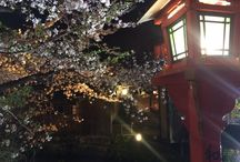 gion SAKURA / Welcome Kyoto!