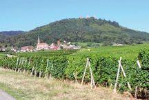 Escapade sur la route des cinq châteaux en Alsace / La route des cinq châteaux traverse le massif des Vosges entre Husseren-les-châteaux et Wintzenheim. Les ruines médiévales au coeur d'un massif forestier offrent une vue imprenable sur la plaine d'Alsace.