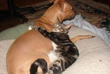 I ♥ cats & dogs & etc