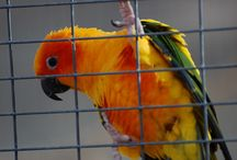 Conures / by Cynthia Dueñas-Manning