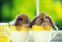 Conejitos tiernos!!! / Estos conejitos son tiernísimos