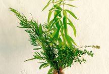 Le projet Chic des Plantes !