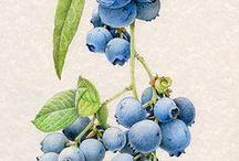 Design SR / Vintage botanical
