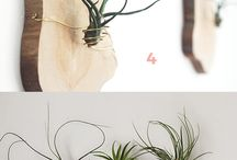 DIY and crafts / Trying out air plant art