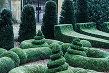 Topiary & hedges