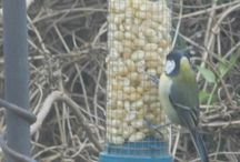 visitors to our garden