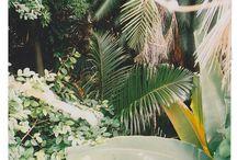 GARDEN / Gorgeous plants
