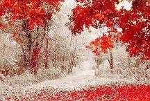seasons/mevsimler
