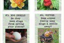 gardening natural tips