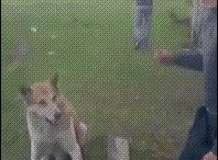 perroos!!