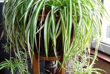 Garden - Dicas de plantas