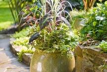 Garden/Outdoors / by K Johnson