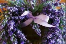 Levendula / Levendula, az egyik legkedveltebb, legsokoldalubb növény http://balkonada.cafeblog.hu/?s=levendula&byBlog=1