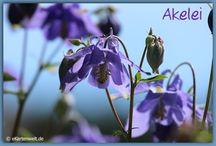 Grußkarten mit Blumen / Blumen, Garten