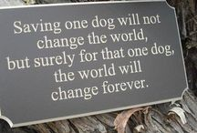 Dogs and other animals / They deserve to be saved and taken care of