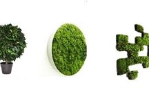 Stabilized Plants / stabilized plants