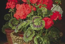 Red Geraniums / by Jan Feaster