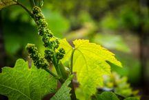 Unique California Wineries / Discovering Boutique California wineries