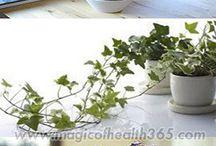 Ύπνος  φυτά για την κρεβατοκάμαρα