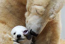animals love wild nature