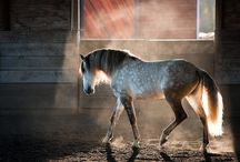 ~>Horses<~