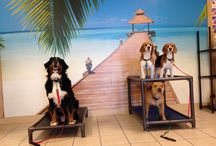 Woofbeach / Dog training and grooming in downtown Geneva, IL