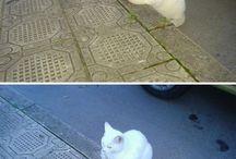 kissa kadun varressa, valkoinen