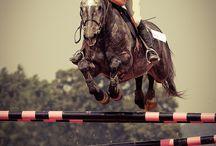>> Horsey stuff <<