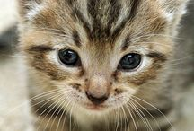 animals / animals is somthing like a dog or a cat