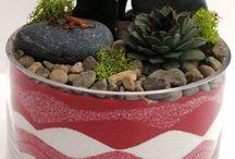 Many Kinds of Garden / Zen Garden