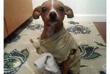disfraces perros