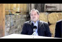 gmo wheat destroys your liver