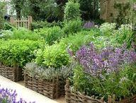 Proutí v zahradě