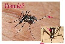 Projecte educatiu del mosquit tigre (La biologia) / El Projecte educatiu del mosquit tigre és una de les línies d'actuació del Programa per a la vigilància, seguiment i control del mosquit tigre, realitzat en col·laboració amb El Servei de Control de Mosquits. Amb aquest taulell podràs saber més coses sobre la biologia d'aquest insecte.