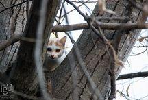 cat / little bit of cat