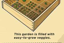 Gardening in boxes