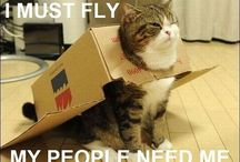 Kitties! / by Nikki Perry