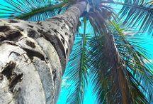 palm's / <3