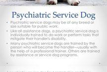 SA Fire dept service dog