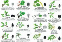 Herb and Plant Identification Sheets