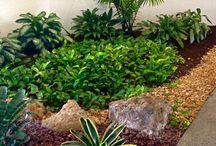 plantas exterior poca luz