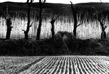 Mario Giacomelli fotografo