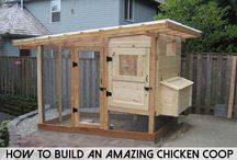 Self Reliance / Chicken Pen