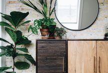 showroom plant