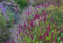 planten van Chris Ghyselen