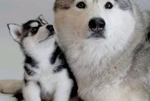Paixão por animais